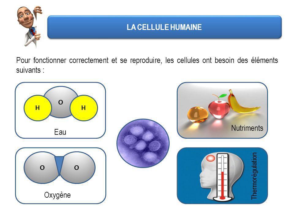 LA CELLULE HUMAINE Pour fonctionner correctement et se reproduire, les cellules ont besoin des éléments suivants :