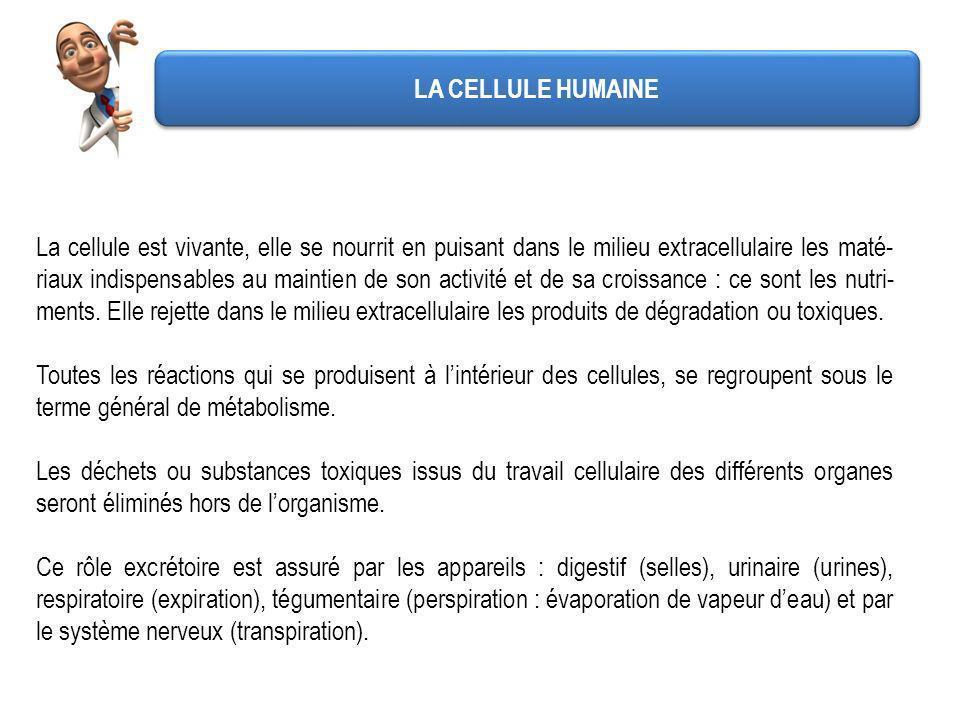 LA CELLULE HUMAINE