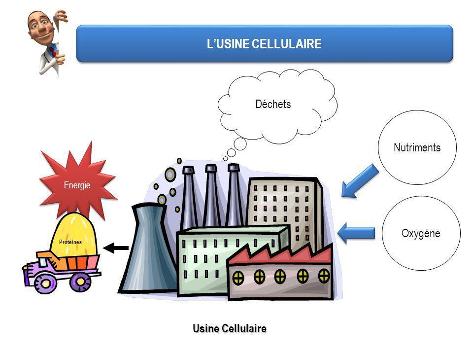 L'USINE CELLULAIRE Déchets Nutriments Oxygène Usine Cellulaire Energie