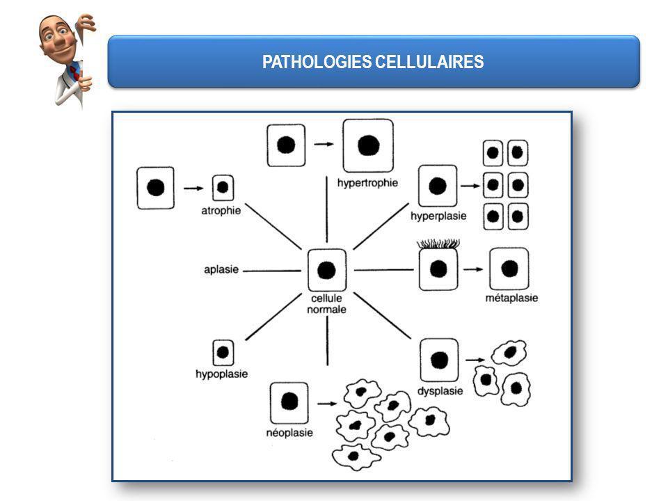 PATHOLOGIES CELLULAIRES