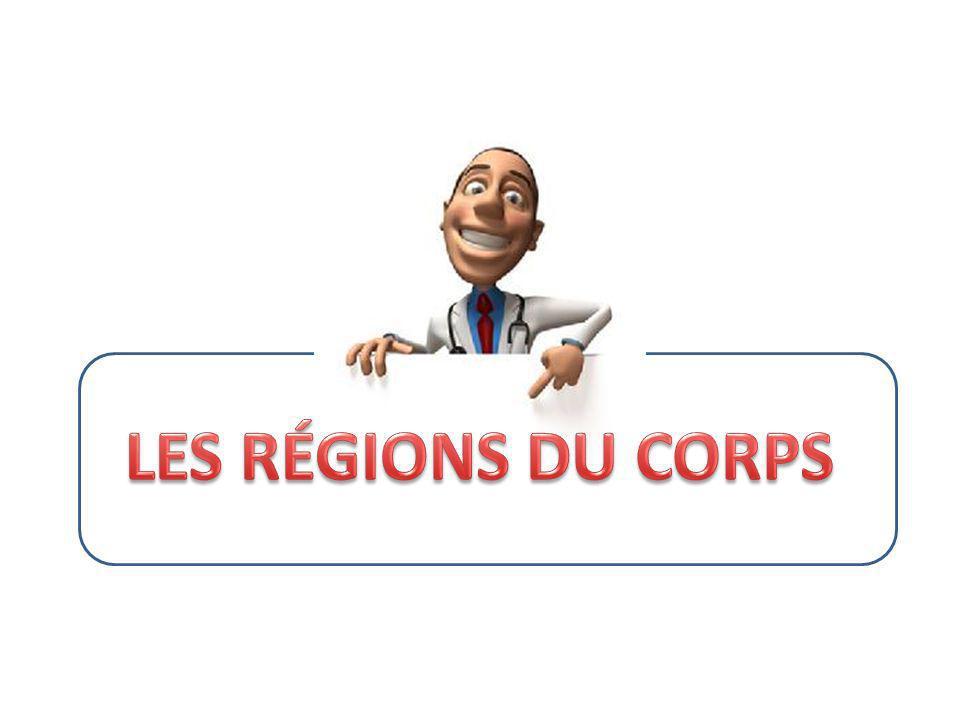 LES RÉGIONS DU CORPS
