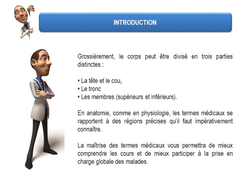 INTRODUCTION Grossièrement, le corps peut être divisé en trois parties distinctes : La tête et le cou,