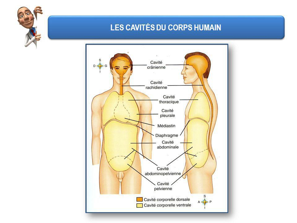 LES CAVITÉS DU CORPS HUMAIN