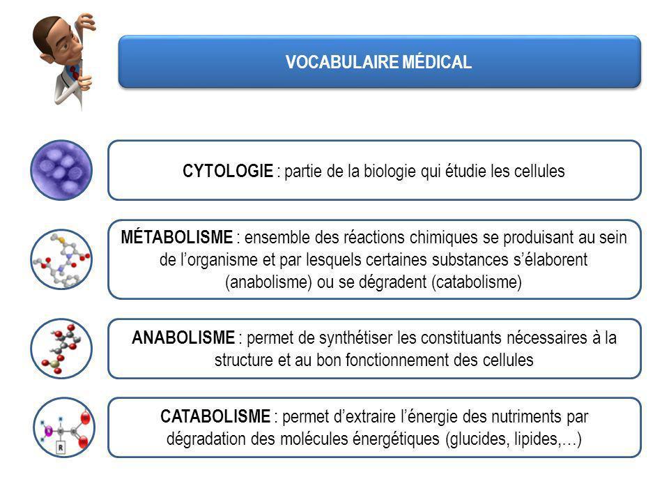 CYTOLOGIE : partie de la biologie qui étudie les cellules