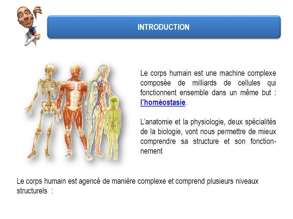 Initiation à l\'anatomie et à la physiologie - ppt video online ...
