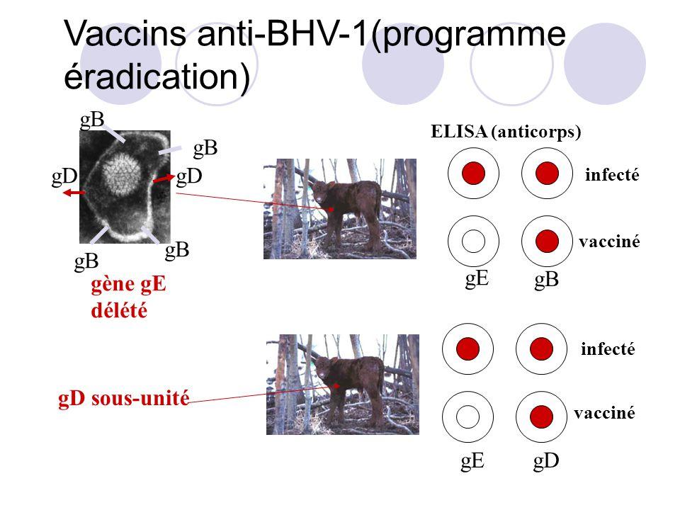 Vaccins anti-BHV-1(programme éradication)