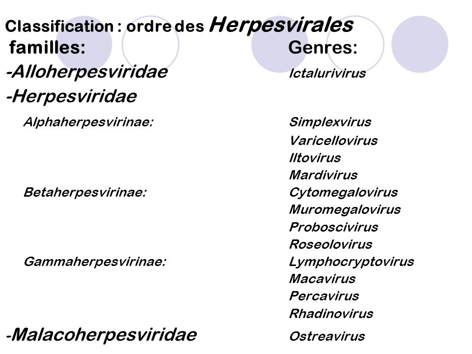 Classification : ordre des Herpesvirales