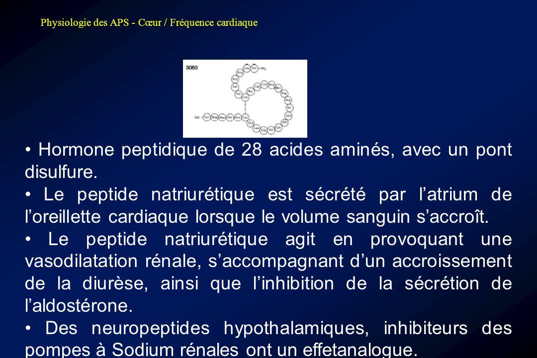 • Hormone peptidique de 28 acides aminés, avec un pont disulfure.