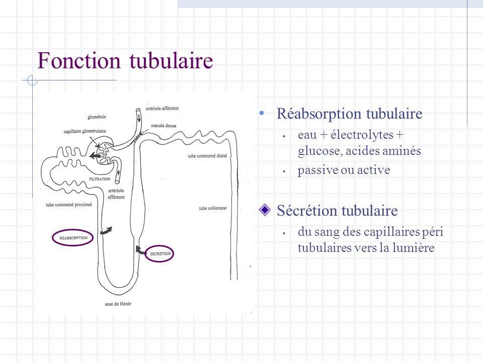 Fonction tubulaire Réabsorption tubulaire Sécrétion tubulaire