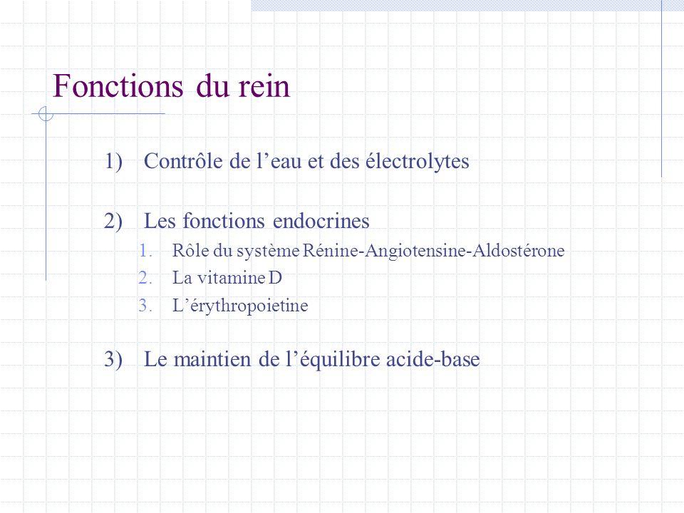 Fonctions du rein Contrôle de l'eau et des électrolytes