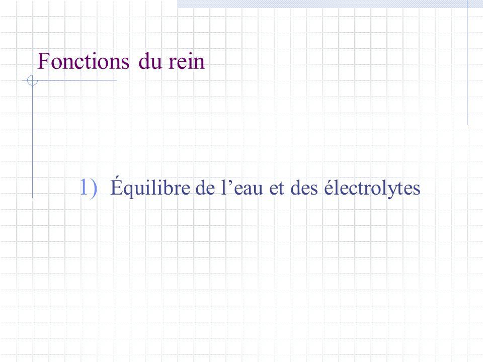 Équilibre de l'eau et des électrolytes