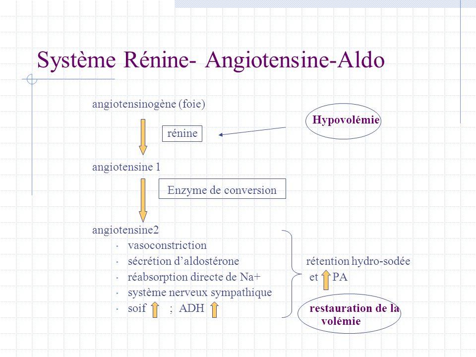Système Rénine- Angiotensine-Aldo