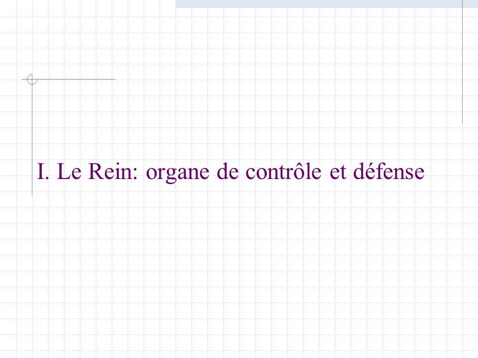 I. Le Rein: organe de contrôle et défense