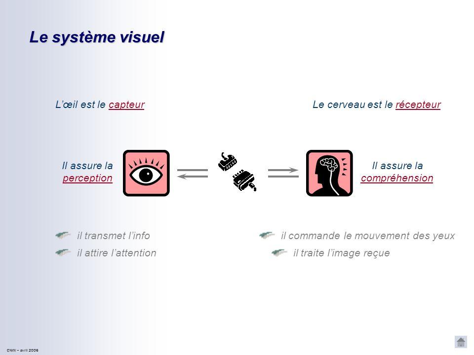 Le système visuel L'œil est le capteur Le cerveau est le récepteur