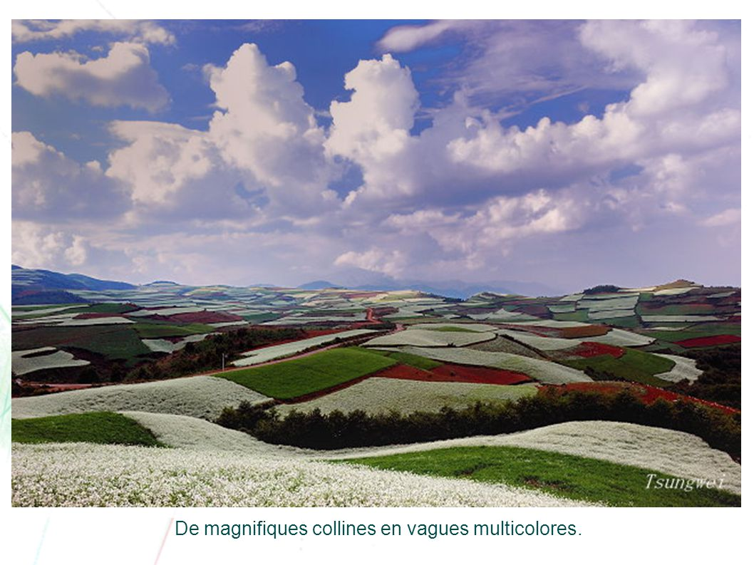 De magnifiques collines en vagues multicolores.
