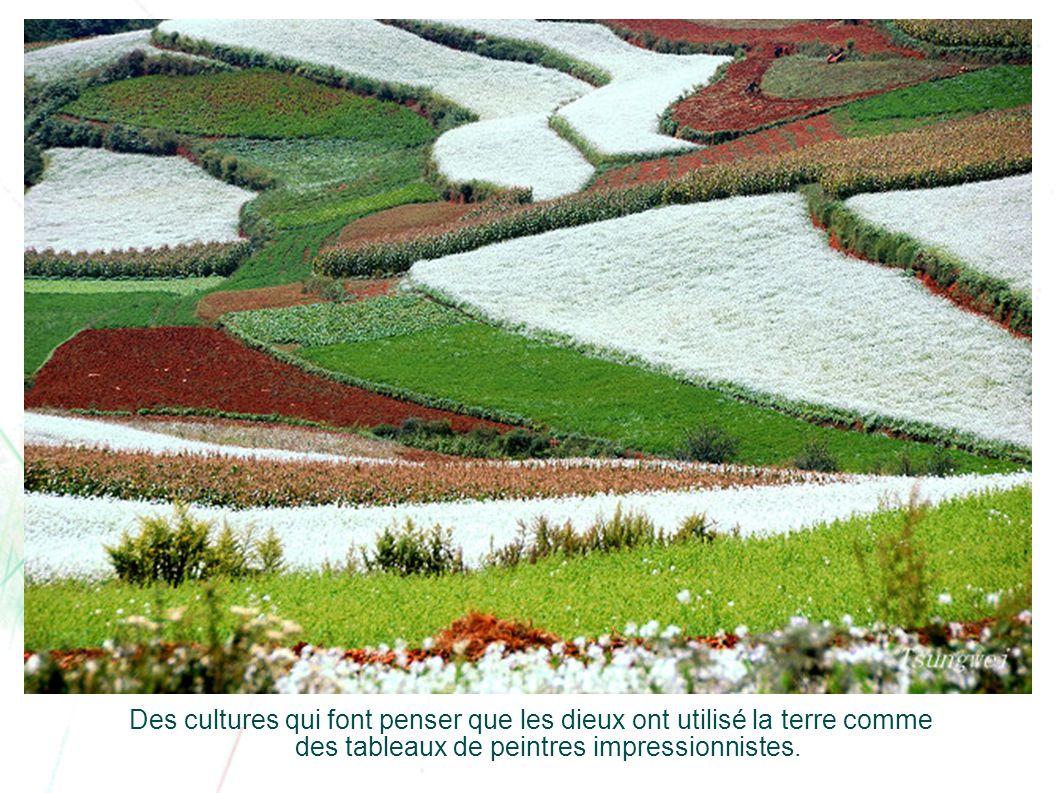 Des cultures qui font penser que les dieux ont utilisé la terre comme des tableaux de peintres impressionnistes.