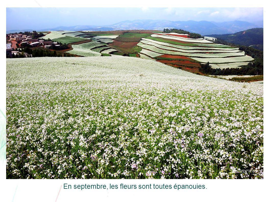 En septembre, les fleurs sont toutes épanouies.