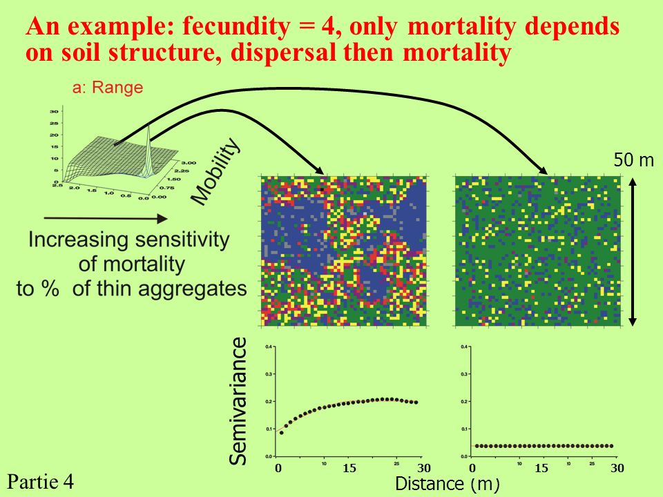 An example: fecundity = 4, only mortality depends on soil structure, dispersal then mortality