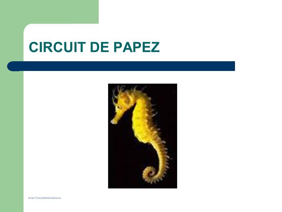 CIRCUIT DE PAPEZ http://pemy07.p.e.pic.centerblog.net/qp9n0juj.jpg