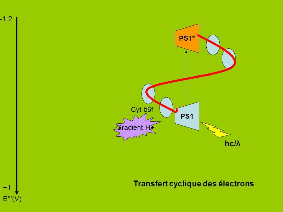 Transfert cyclique des électrons