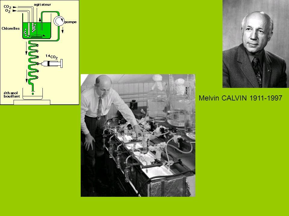 Melvin CALVIN 1911-1997
