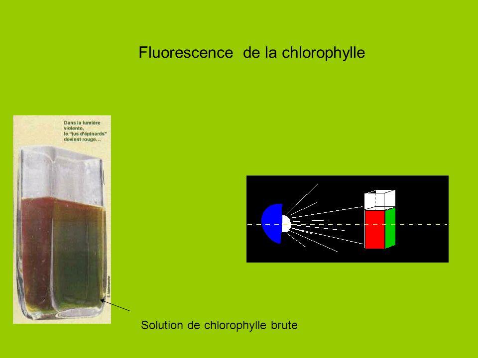 Fluorescence de la chlorophylle