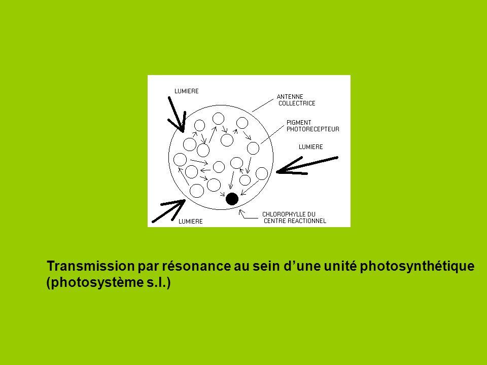 Transmission par résonance au sein d'une unité photosynthétique