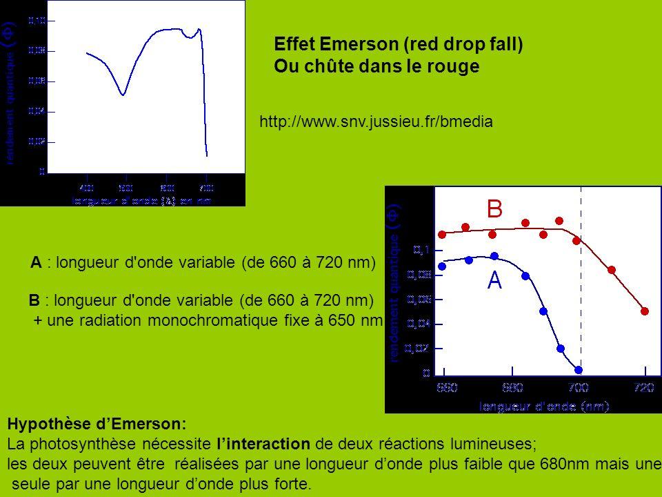 Effet Emerson (red drop fall) Ou chûte dans le rouge