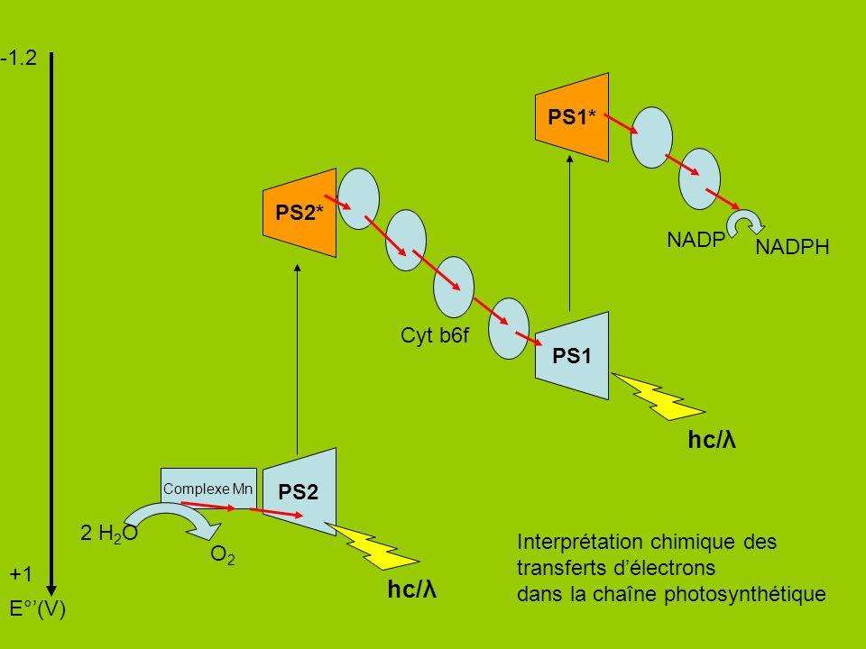 hc/λ hc/λ -1.2 PS1* PS2* NADP NADPH Cyt b6f PS1 PS2 2 H2O