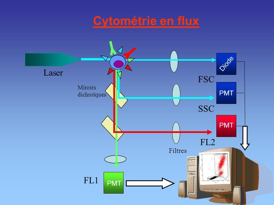 Cytométrie en flux Laser FSC SSC FL2 FL1 Diode PMT PMT Filtres PMT