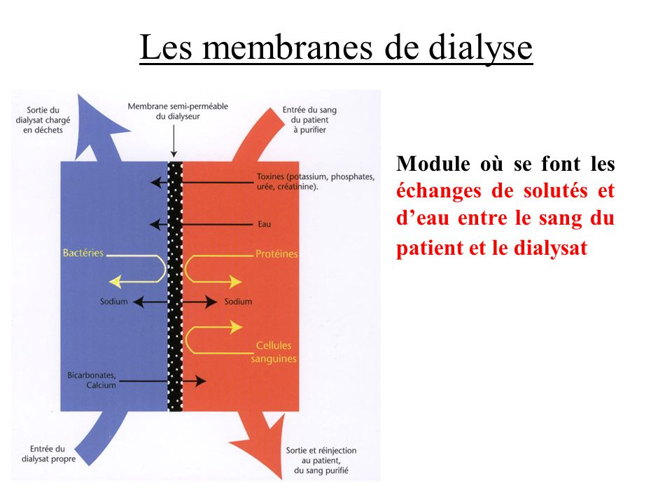 Les membranes de dialyse