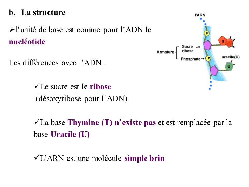 La structure l'unité de base est comme pour l'ADN le nucléotide. Les différences avec l'ADN : Le sucre est le ribose.