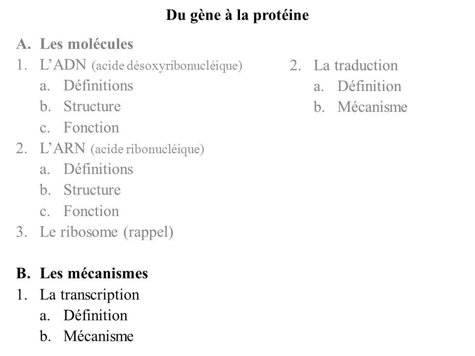 Du gène à la protéine A. Les molécules. L'ADN (acide désoxyribonucléique) Définitions. Structure.