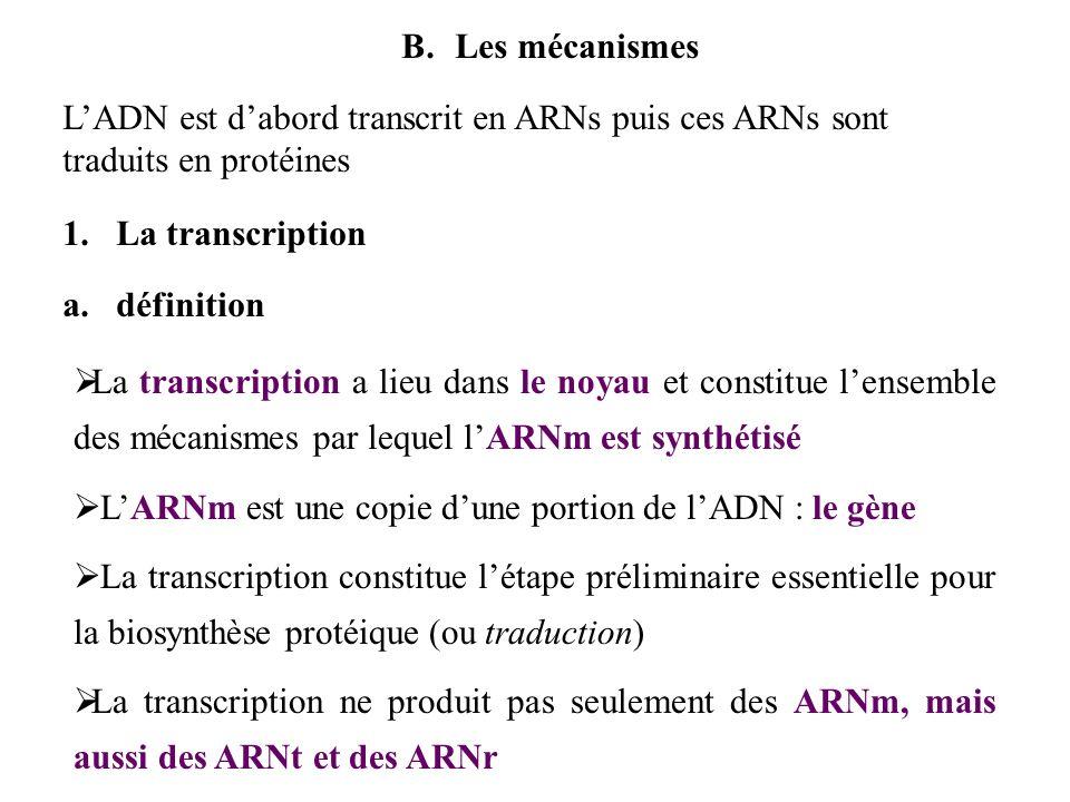 Les mécanismes L'ADN est d'abord transcrit en ARNs puis ces ARNs sont traduits en protéines. La transcription.