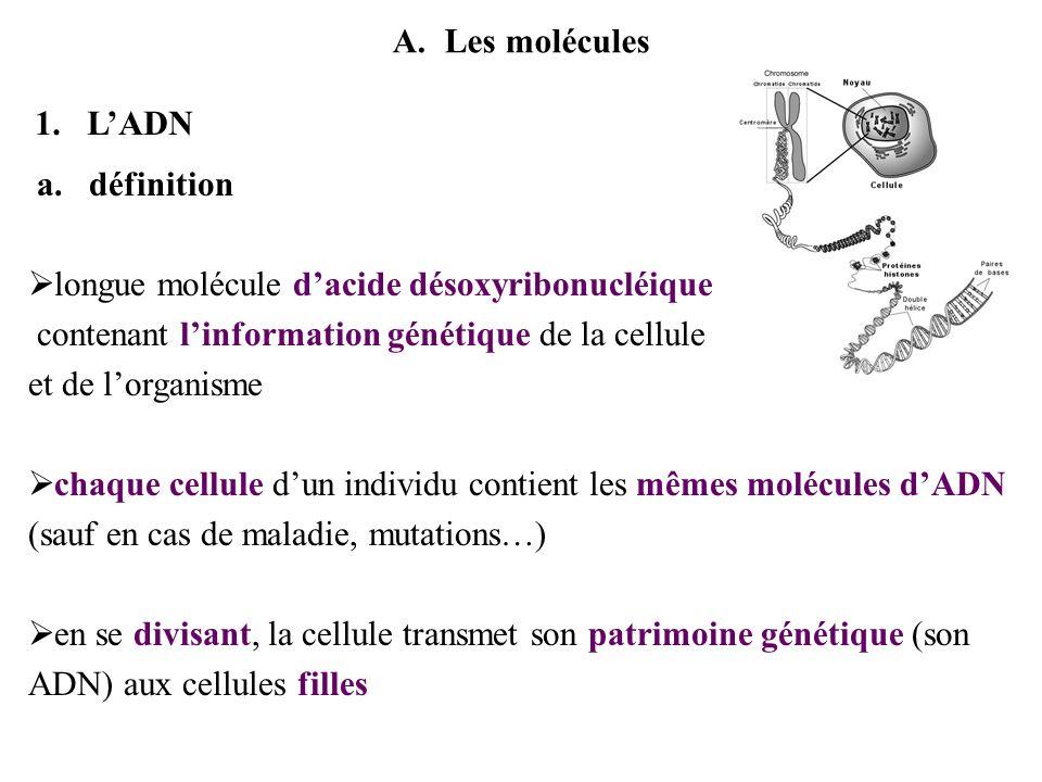 Les moléculesL'ADN. définition. longue molécule d'acide désoxyribonucléique. contenant l'information génétique de la cellule.