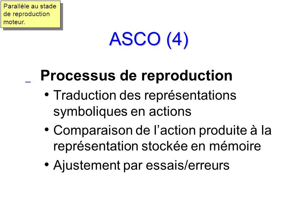 ASCO (4) Processus de reproduction