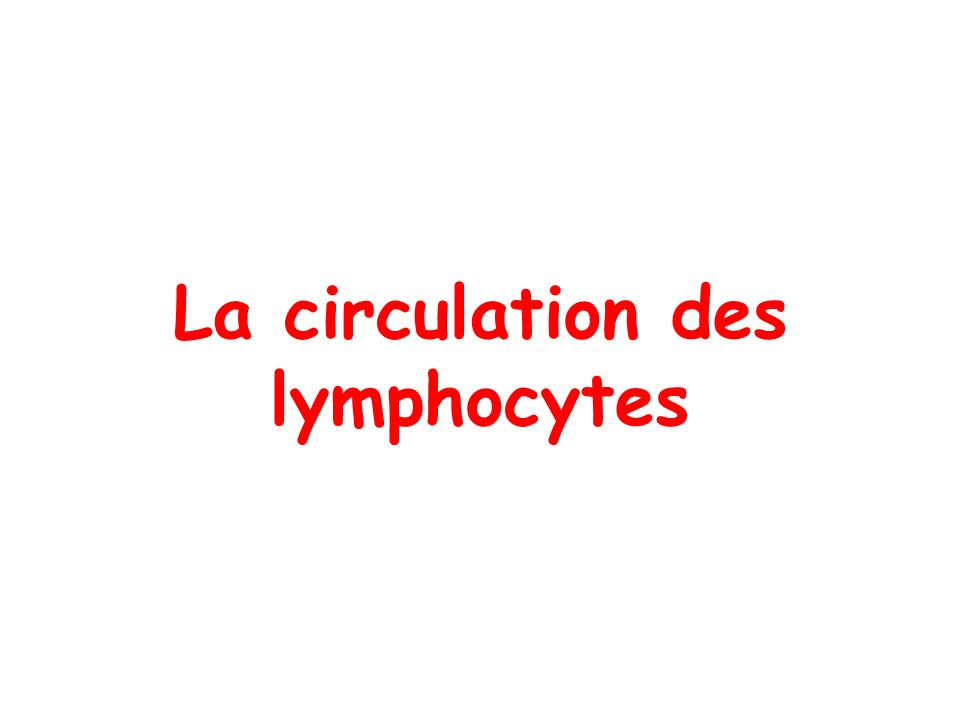 La circulation des lymphocytes