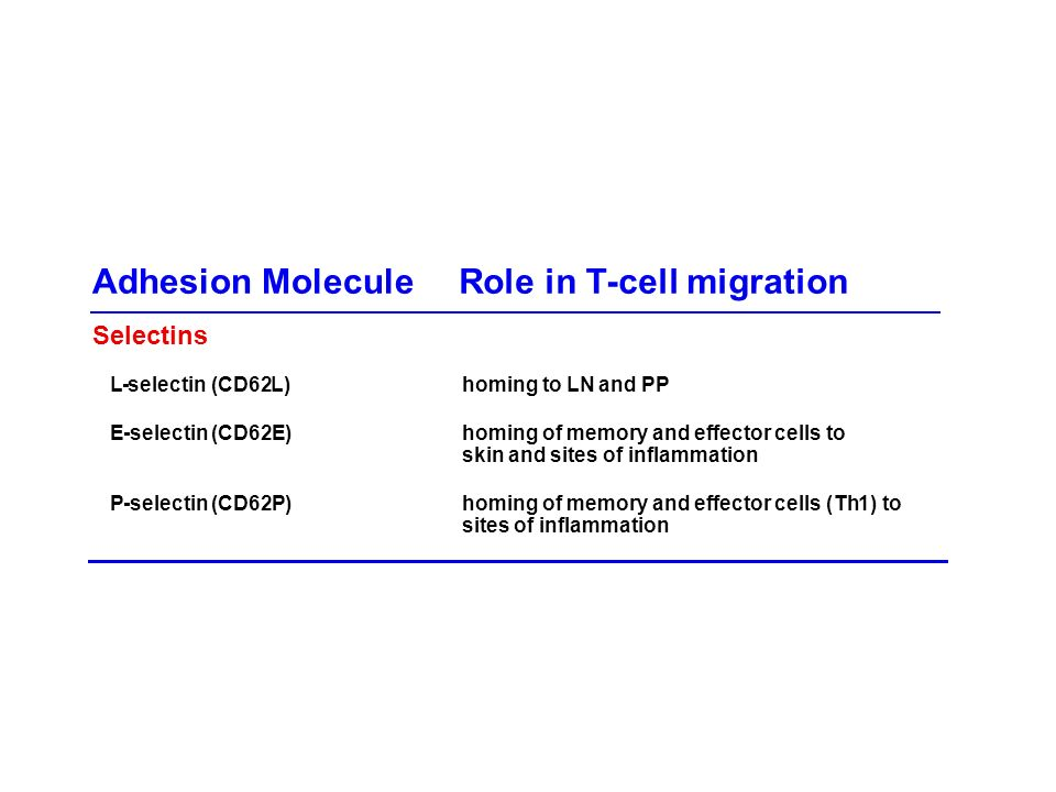 Adhesion Molecule Role in T -cell migration Selectins L - selectin