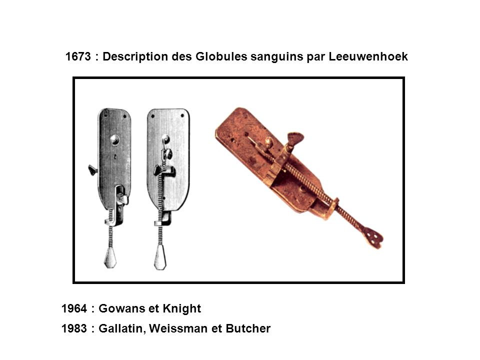 1673 : Description des Globules sanguins par Leeuwenhoek
