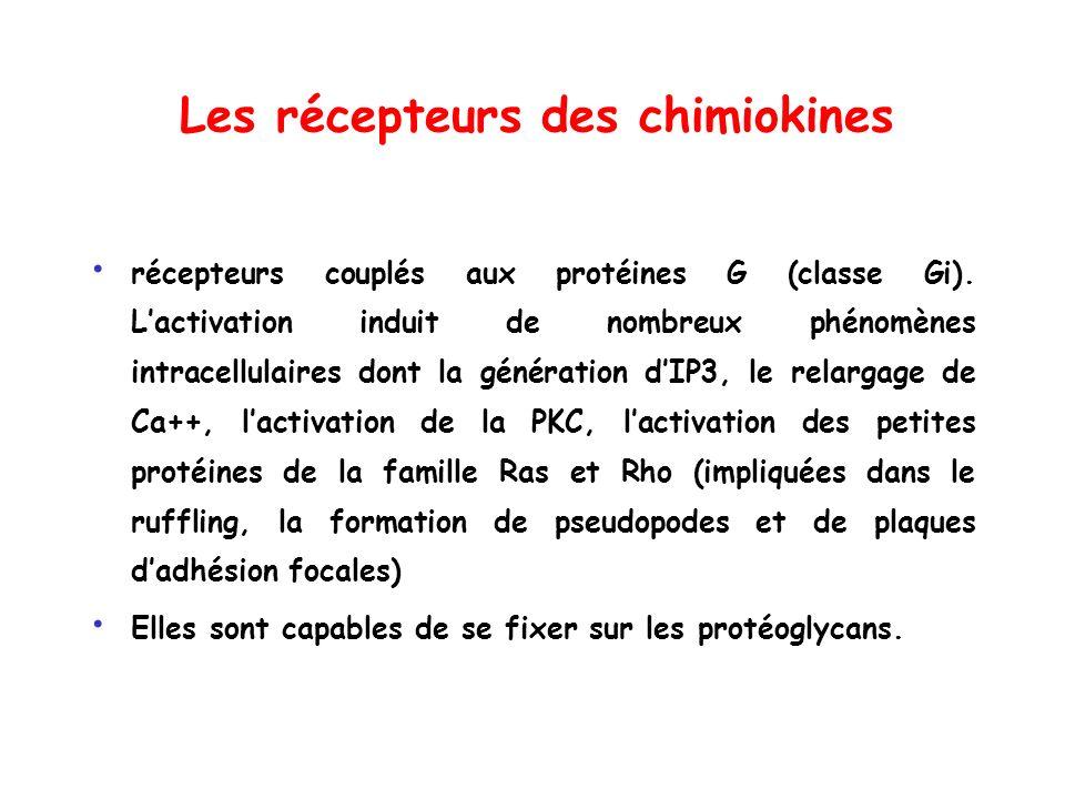Les récepteurs des chimiokines
