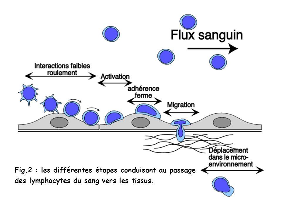 Fig.2 : les différentes étapes conduisant au passage