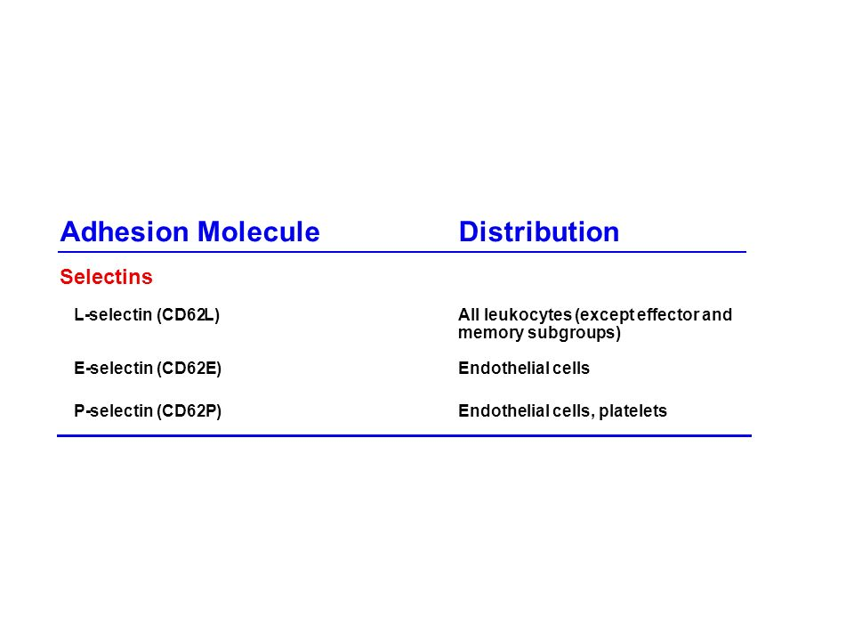 Adhesion Molecule Distribution Selectins L - selectin (CD62 )