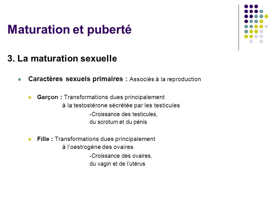 Maturation et puberté 3. La maturation sexuelle