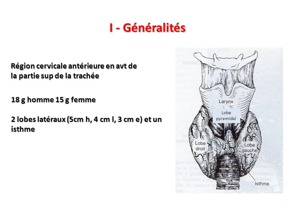 I - Généralités Région cervicale antérieure en avt de la partie sup de la trachée. 18 g homme 15 g femme.