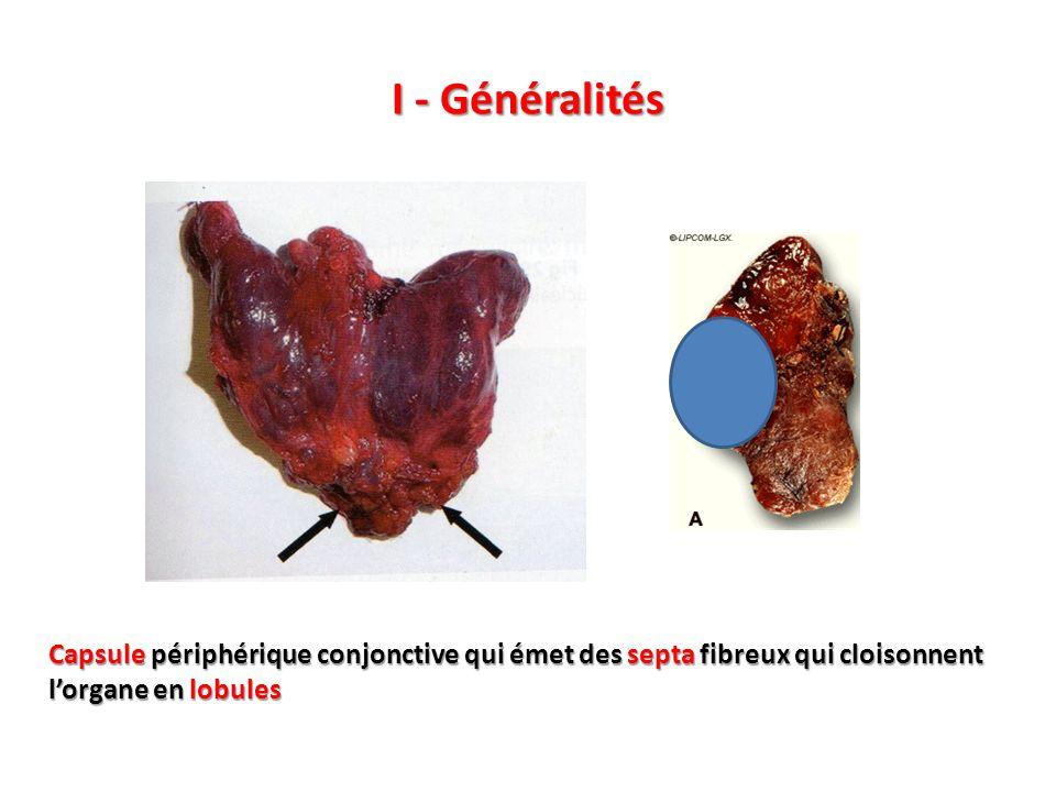 I - GénéralitésCapsule périphérique conjonctive qui émet des septa fibreux qui cloisonnent l'organe en lobules.