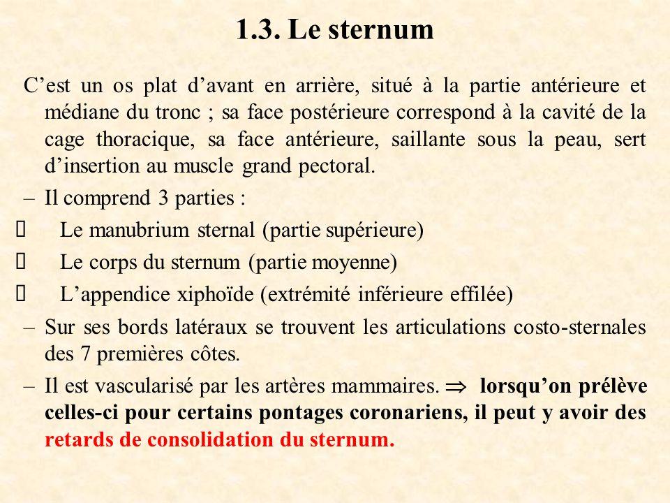 1.3. Le sternum