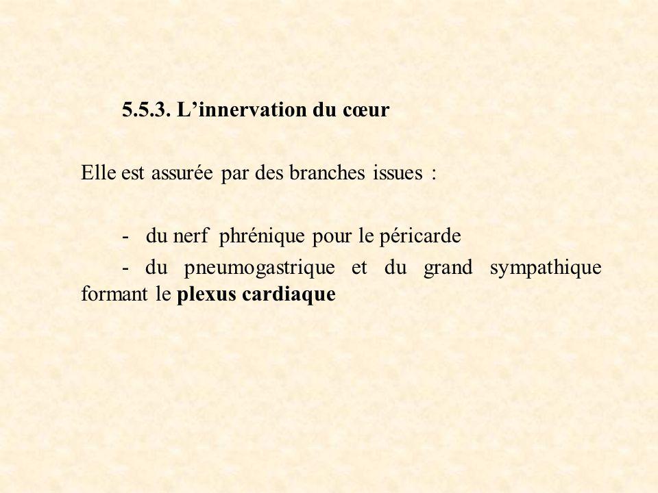 5.5.3. L'innervation du cœur Elle est assurée par des branches issues : - du nerf phrénique pour le péricarde.