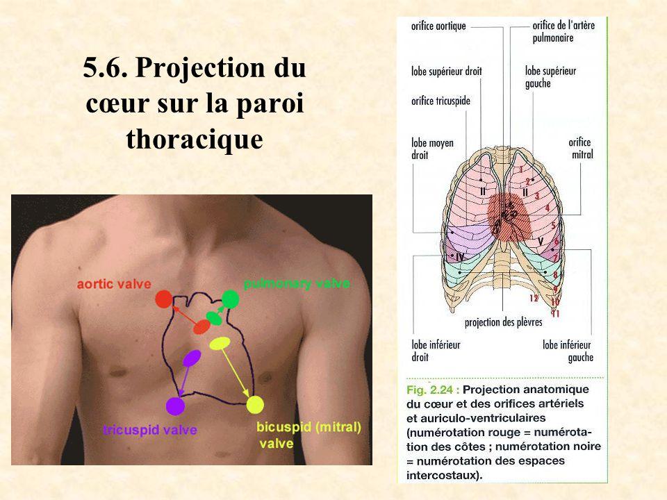 5.6. Projection du cœur sur la paroi thoracique