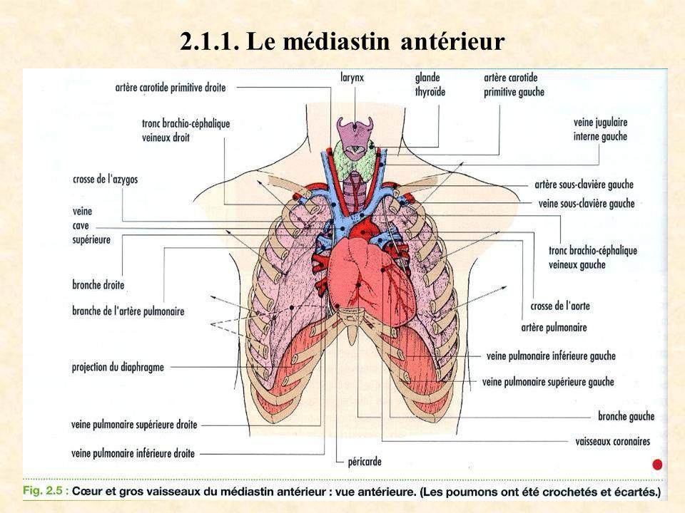2.1.1. Le médiastin antérieur