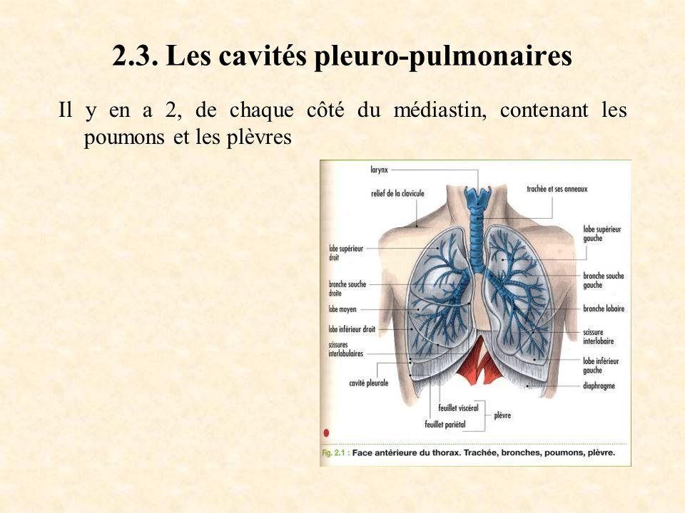 2.3. Les cavités pleuro-pulmonaires